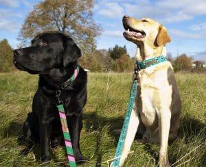 Dublin Dog Eco Lucks Dog Collars