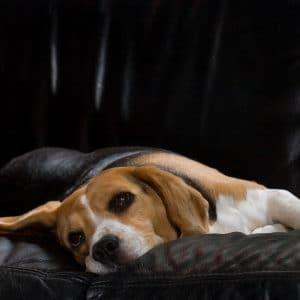 Dog not feeling well
