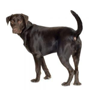A dog's tail