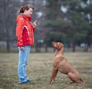 Teaching dogs the sit command