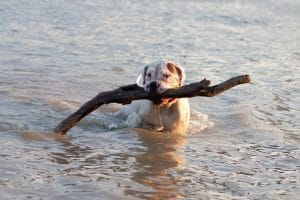 Playing in the water with your dog
