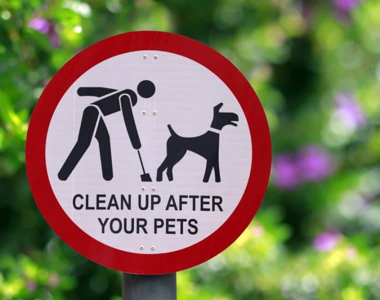 Doggie Poop