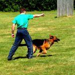 How to train a dog to heel