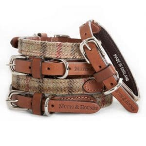 Mutts and Hounds Balmoral Collar