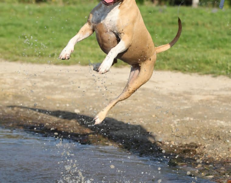 Why Do Dogs Urinate When Excited?