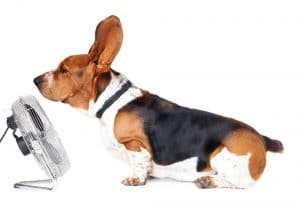 Why Do Dogs Put Their Ears Back?