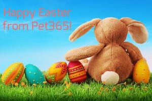 Happy Easter from Pet 365
