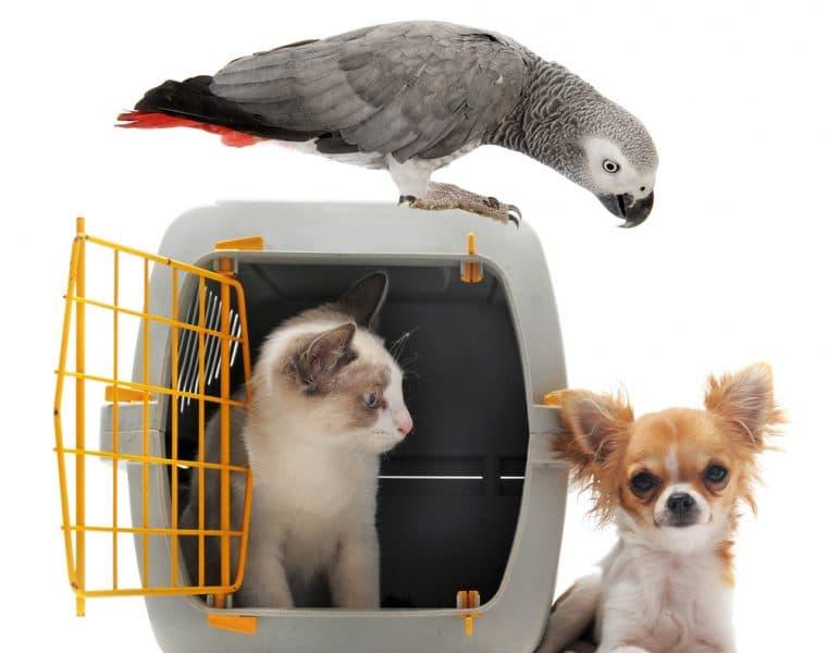 Bird, Dog and Cat