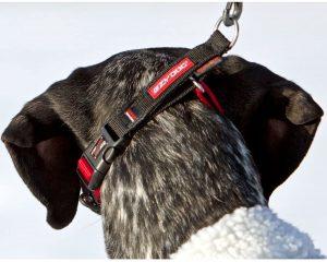 Ezydog Checkmate Half Check Dog Collar