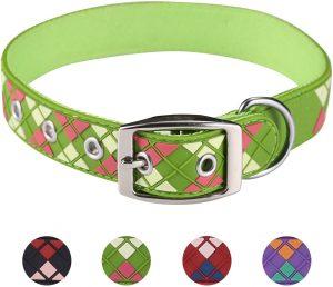 Paw sport new argyle waterproof dog collar
