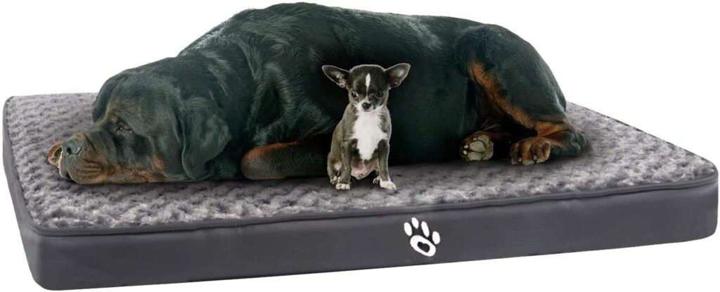 GoFirst Dog Bed