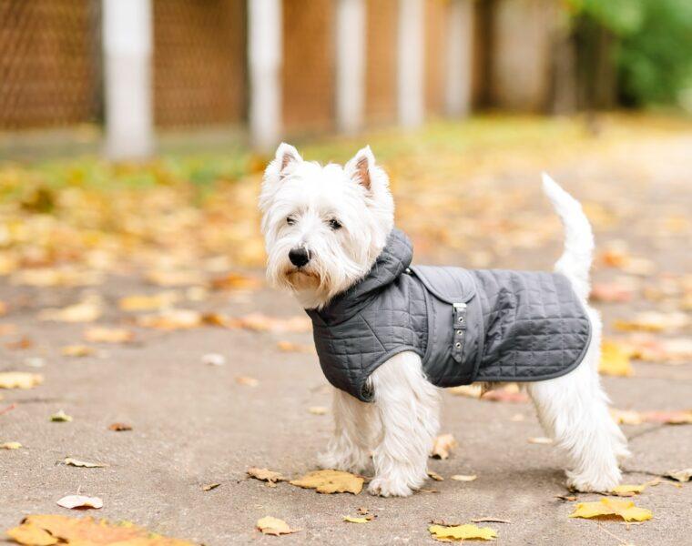 Best Dog Coats